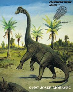 Brachiosaurus- 52ft tall, 85ft long