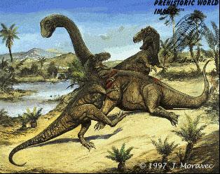 Camarasaurus (66ft long) & Allosaurus  (36ft long)