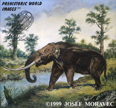 http://www.prehistory.com/dinosaurs/mastodon.jpg