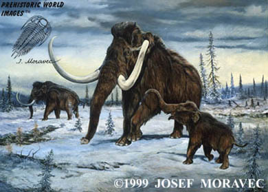 Mammoths