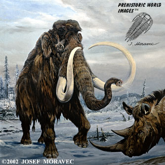 Mamut vs slon